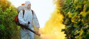 Aprovados apressadamente, novos agrotóxicos são devastadores para abelhas — mas podem contaminar milhares de outras espécies e água que bebemos