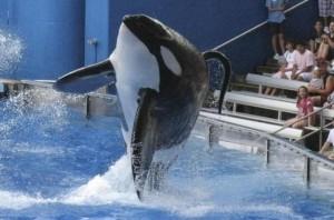 """In 1991, Tilikum killed trainer Keltie Byrne. On February 24, 2010, Tilikum brutally attacked and killed veteran SeaWorld Orlando whale trainer Dawn Brancheau,"" writes Rose Aguilar [Reuters]"