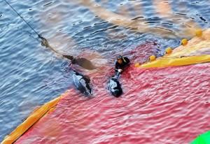Dolphin killing in Taiji. Photo: Robert Gilhooly.