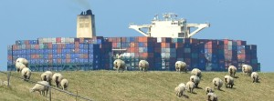 DPA - Sheep graze in a pasture along the Elbe River in Germany: Concern is growing over the trans-Atlantic free trade agreement.