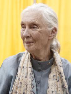Dame Jane Goodall, 2011 (Photograph by Angela George via Wikimedia Commons)