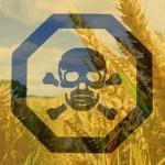 seeds of destruction gmo