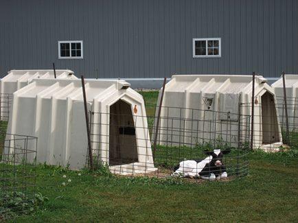 animal farm1