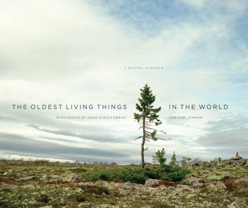 oldest living things world
