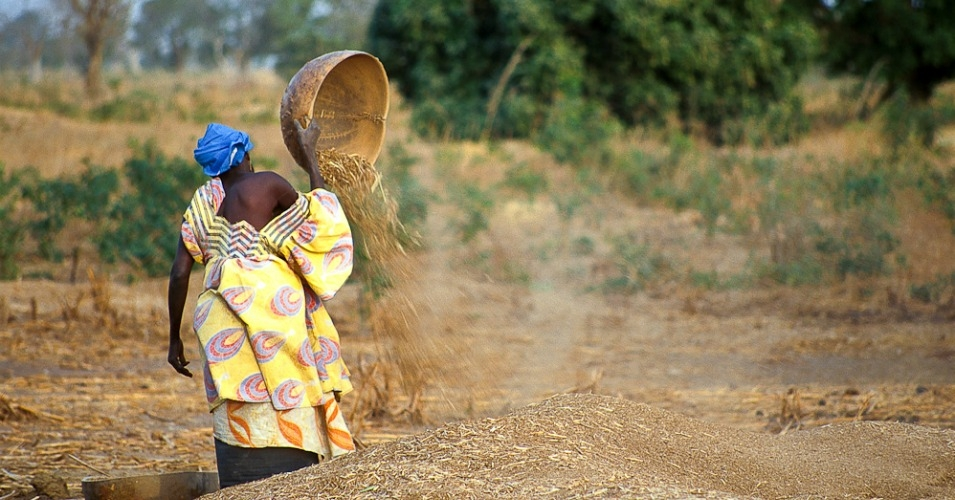 A woman processing millet in Senegal.  (Photo: Kevin Sharp/flickr/cc)