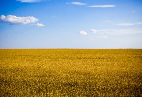 Typical agricultural landscape of Ukraine, Kherson Oblast. Credit: Dobrych (Flickr)/CC-BY-SA-2.0, via Wikimedia Commons