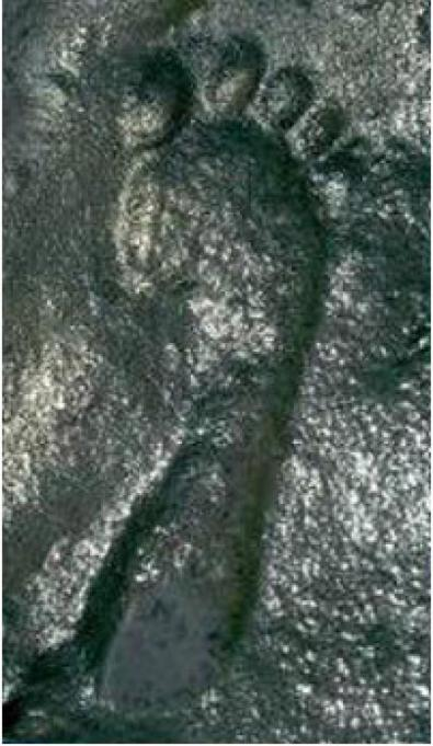 290-million-year-old-footprint-Ancient-Code2