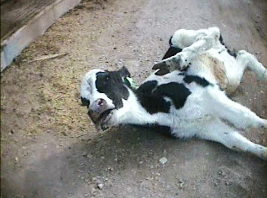 essay on pet animals cow Essay on cow - download as animals and humans rating grass filed ins tead of eating at one place etc cow essay 6 (400 words) cow is a very useful pet.