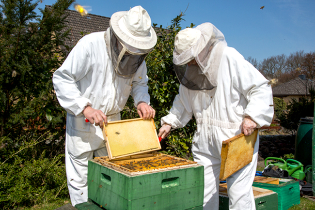 A survey from the USDA reported that more than 40 percent of bee hives died in the past year, the second-highest annual loss seen since these annual surveys began in 2010. Photo Credit: Shutterstock