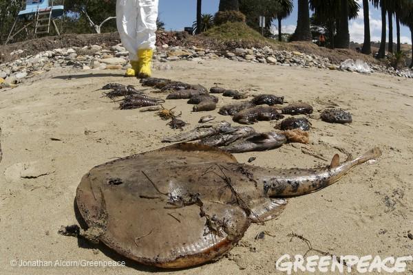 california oil spill greenpeace3