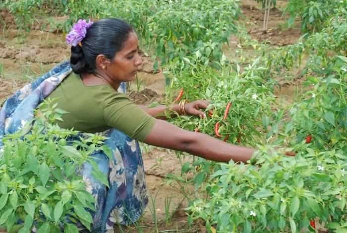 india farmer sustainability