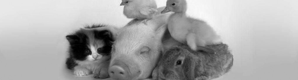 cropped-baby-chicken-duck-on-pig-pb animal rights