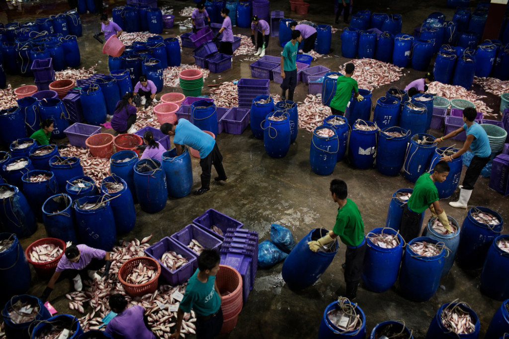 Dockworkers sorted through deliveries of fish at a processing facility in Ranong, Thailand. Credit Adam Dean for The New York Times