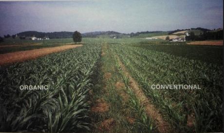 organic farming rodale institute 30 year trial