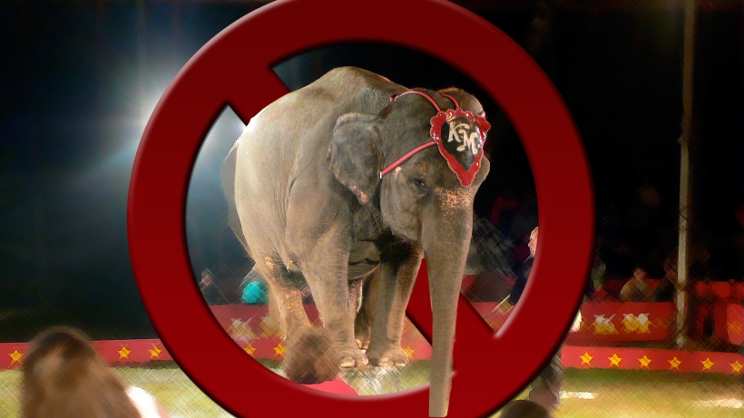 circusanimal1 elephant