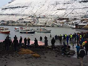Crowds gather at the Fuglafirði killing beach. Photo: Sigrid Petersen