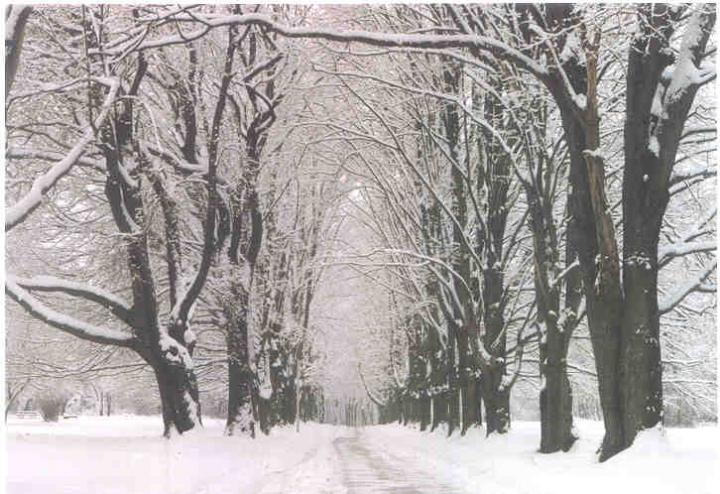 winter_infinity