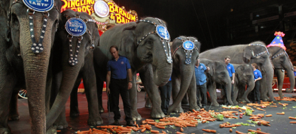 Elephants and trainers in a Ringling Bros. performance. (photo: Getty Images)
