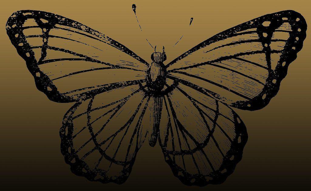 berenice-butterfly_1_lg borboleta