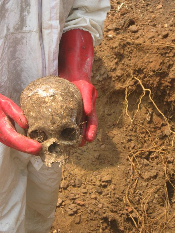 A skull of a victim found in a mass grave near a peacekeeping base in Boali, Central African Republic. The victim is believed to be an individual who was summarily executed by Republic of Congo peacekeepers on March 24, 2014. © 2016 Private