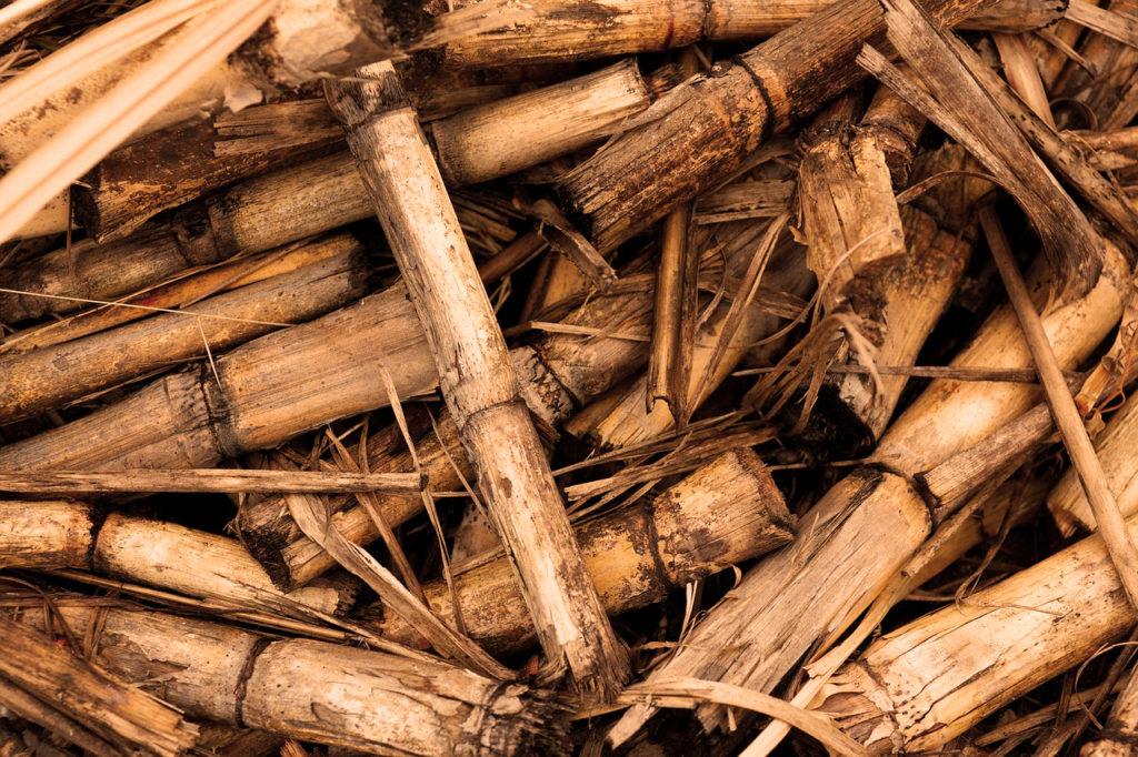 cana sugar cane