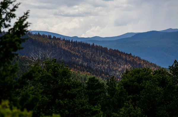 Charred trees outside Nederland, Colo., after a wildfire burned 600 acres in July. Two transient men were charged with starting the blaze when a campfire was not fully extinguished. Nick Cote for The New York Times