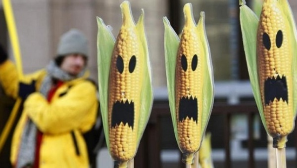 A Greenpeace activist displays signs symbolizing genetically modified crops at a protest in front of the European Union headquarters in Brussels Nov. 24, 2008. | Photo: Reuters