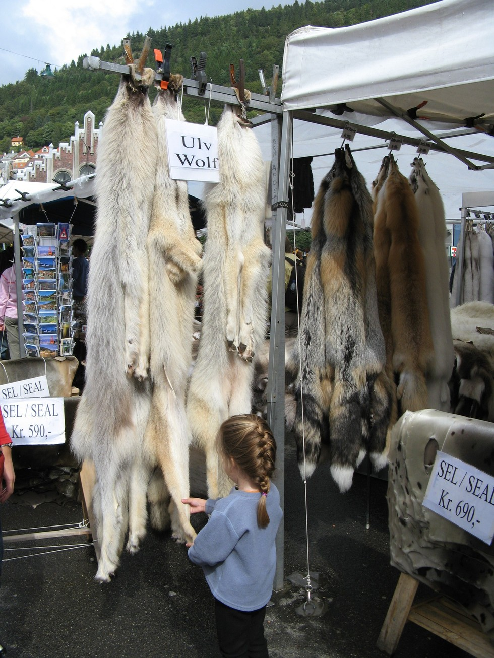 Wolf skins for sale at the Bergen fish market in Norway.Credit: Wikipedia Commons