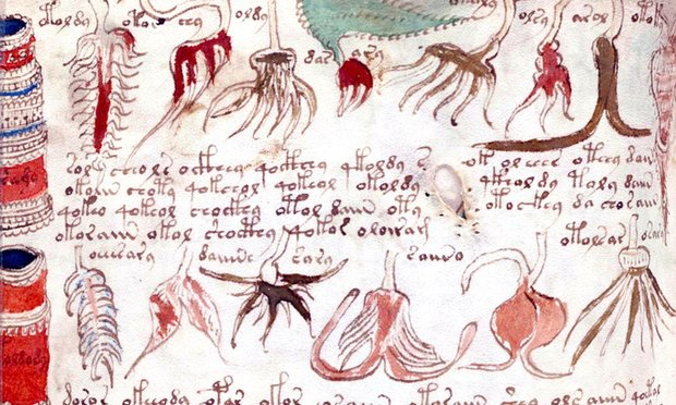 Images and text from the Voynich manuscript. Photograph: Universal History Archive via Getty Images