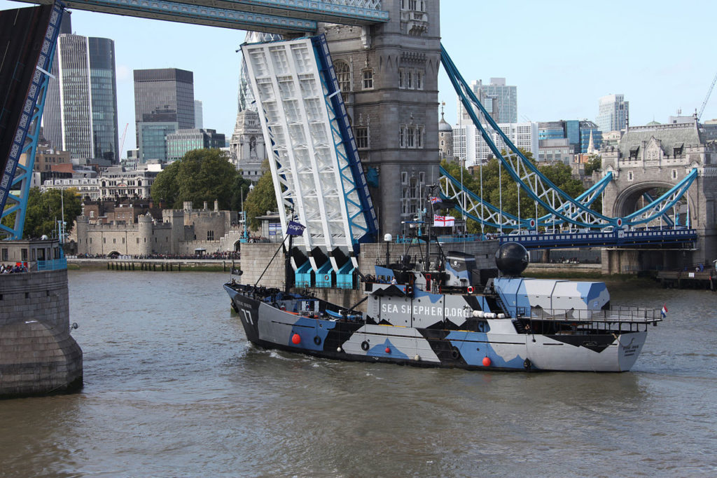 The MY Steve Irwin going up river through Tower Bridge London 12 September 2011. (Wikimedia Commons)