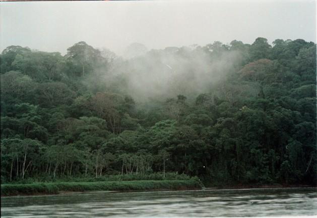 Cloud forest in Costa Rica. Credit: Germán Miranda/IPS.