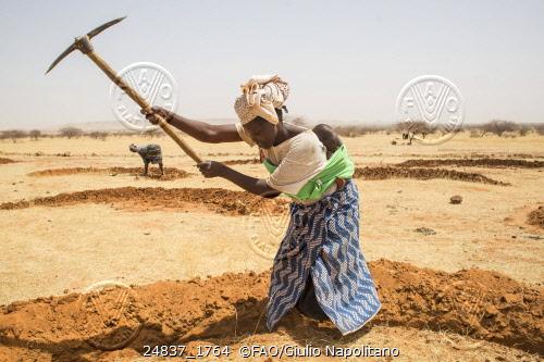 Djibo, Burkina Faso – Planting seeds and seedlings. Credit: ©FAO/Giulio Napolitano