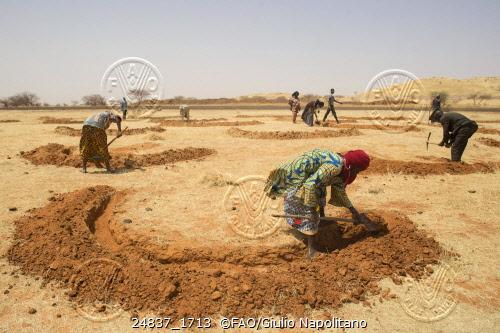 Tera, Bajirga, Niger - Women at work for preparing the field for the next rainy season by escaving mid-moon dams to save water. Credit: ©FAO/Giulio Napolitano