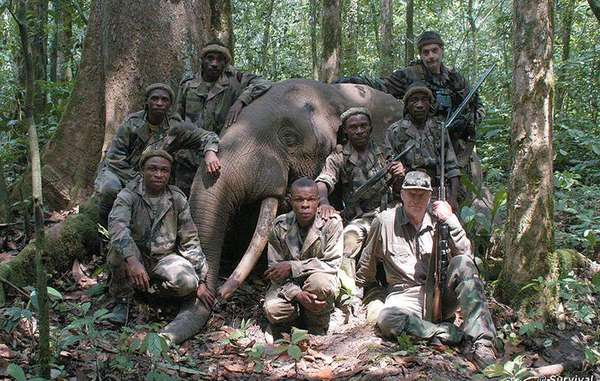 WWF trustee Peter Flack with dead forest elephant © Peter Flack