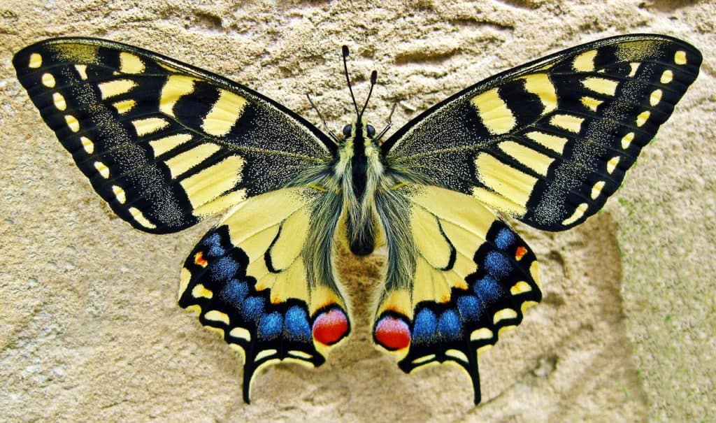 transcend media service the ultimate guide to butterflies how to