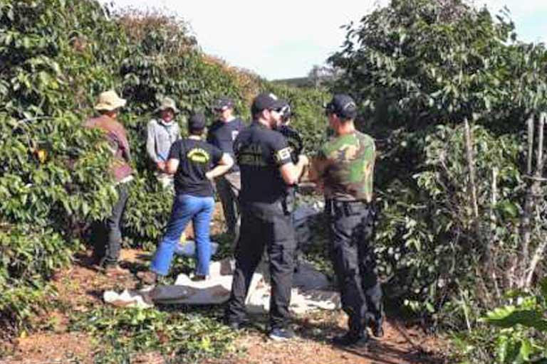 transcend media service slave labor found at starbucks certified